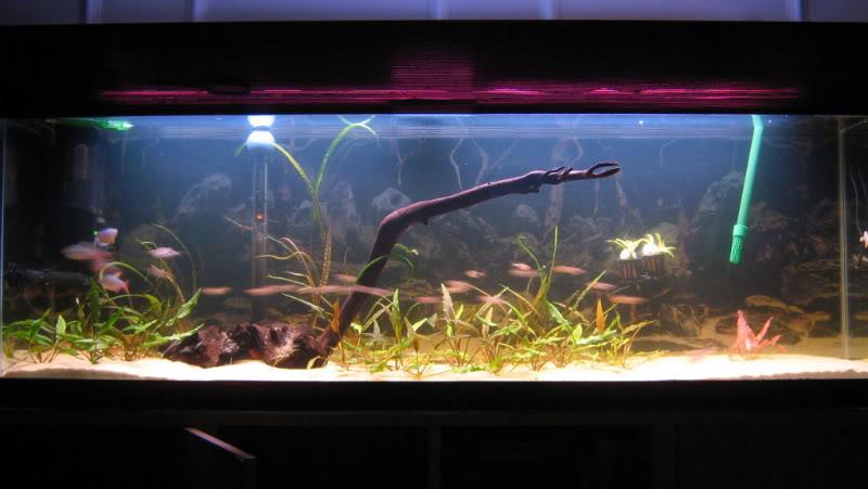 Fishtank004-1.jpg