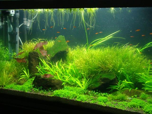 fishtank005.jpg