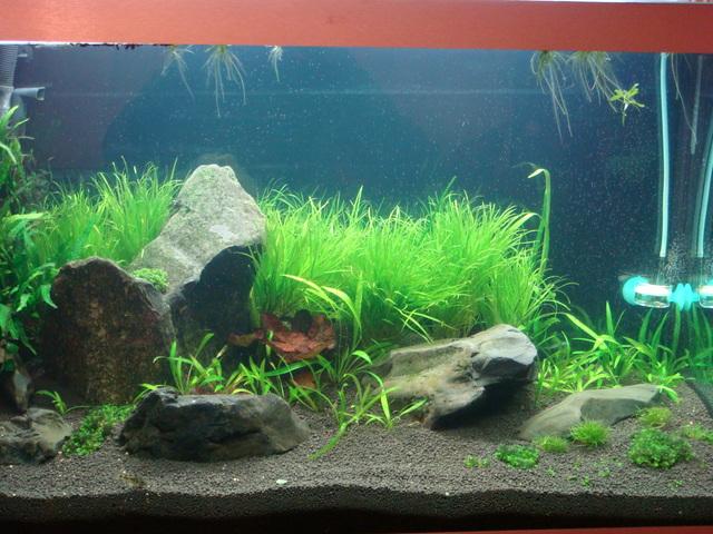 fishtank008.jpg