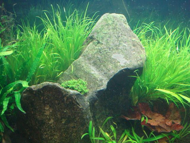 fishtank009.jpg
