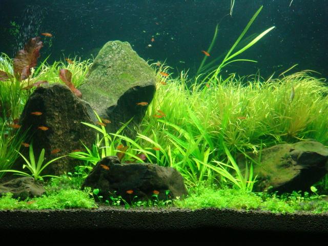 fishtank010.jpg
