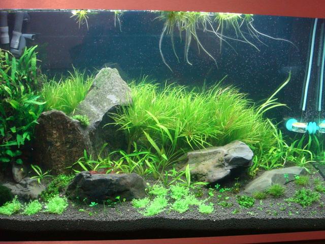 fishtank012.jpg