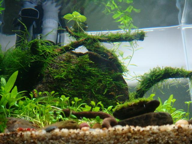 fishtank013.jpg