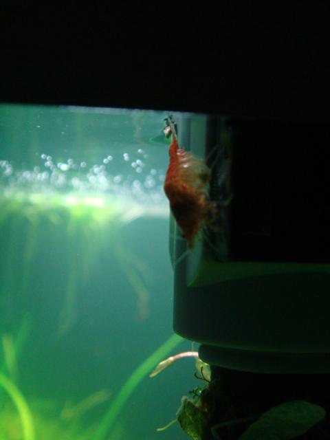 fishtank014.jpg