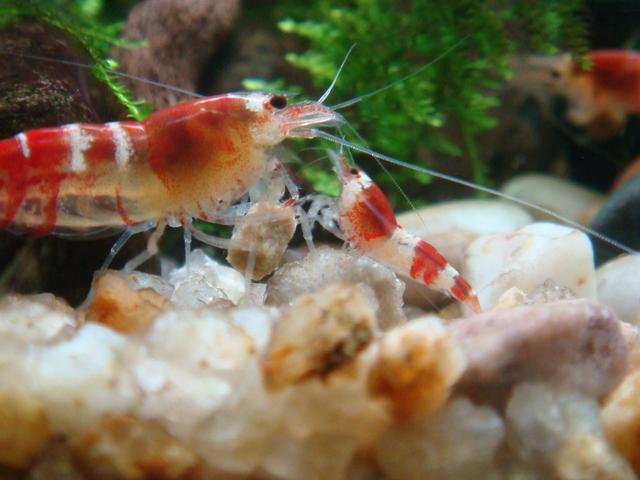 fishtank015.jpg