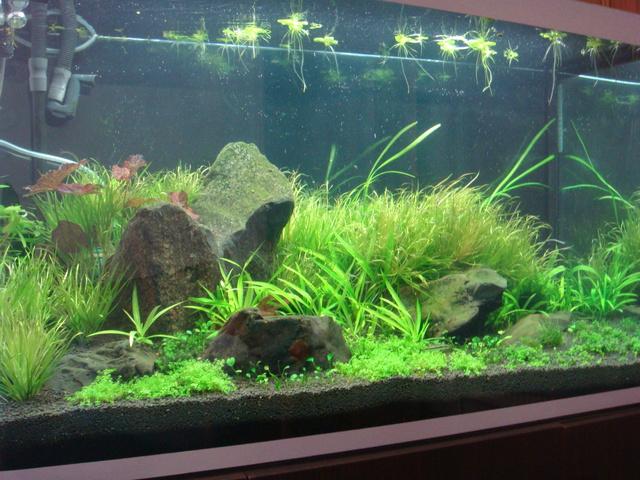 fishtank019.jpg