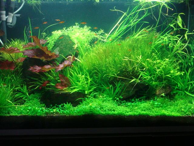 fishtank057.jpg