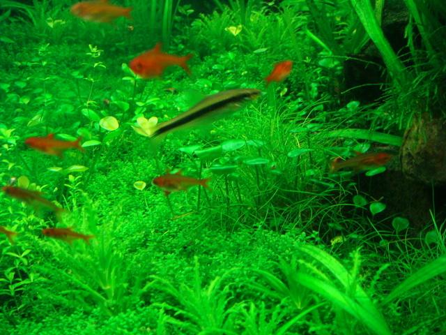 fishtank061.jpg