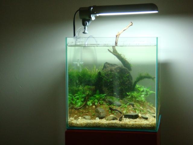 fishtank078.jpg