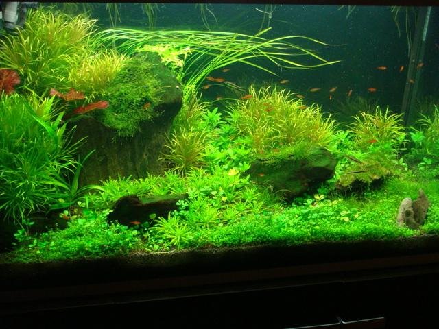 fishtank087.jpg