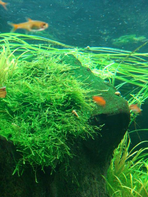 fishtank088.jpg