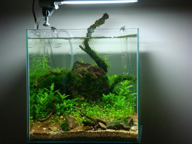 fishtank090.jpg