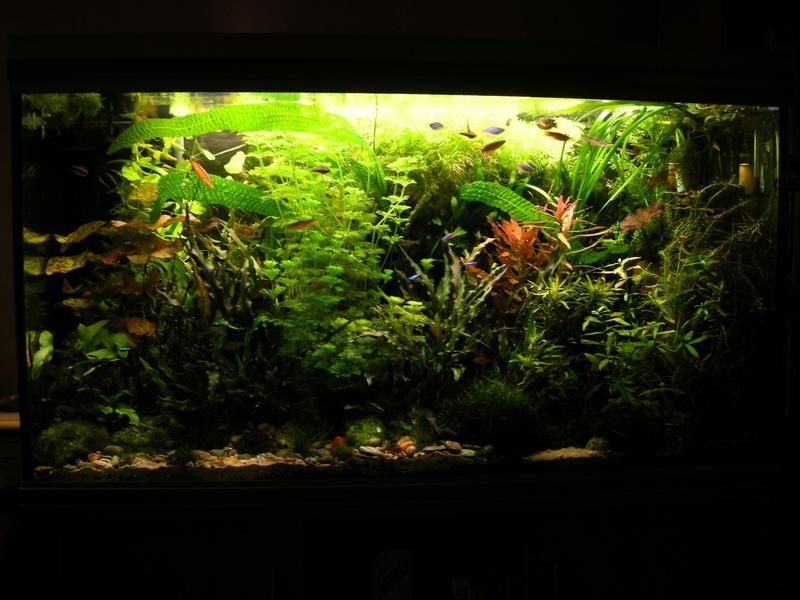 fishtank1008006cc7.jpg