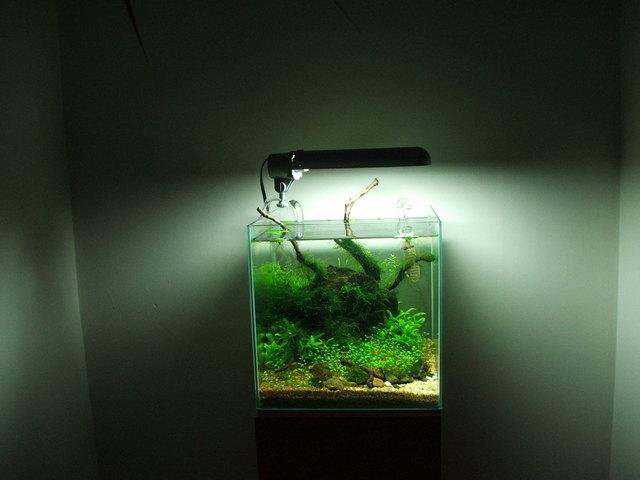 fishtank110.jpg