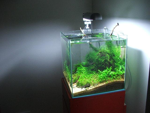 fishtank111.jpg