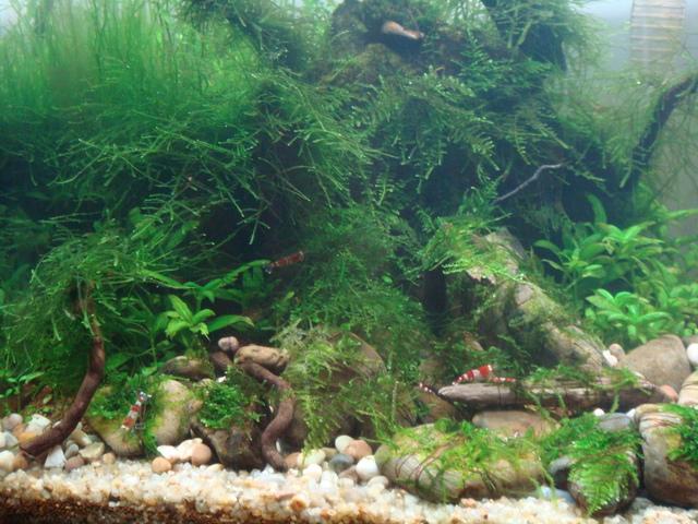 fishtank142.jpg