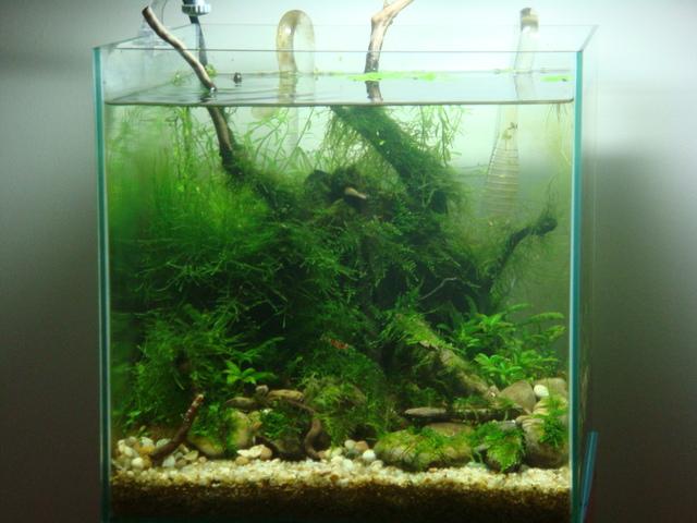 fishtank144.jpg