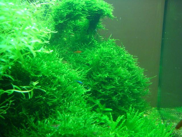 fishtank152.jpg