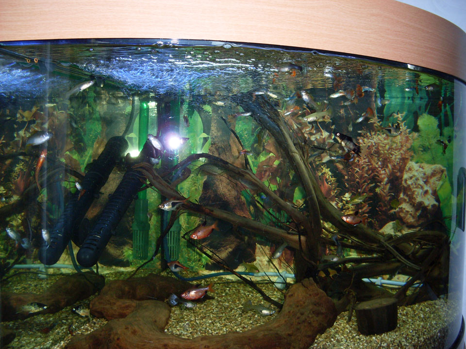 fishtank1m.jpg