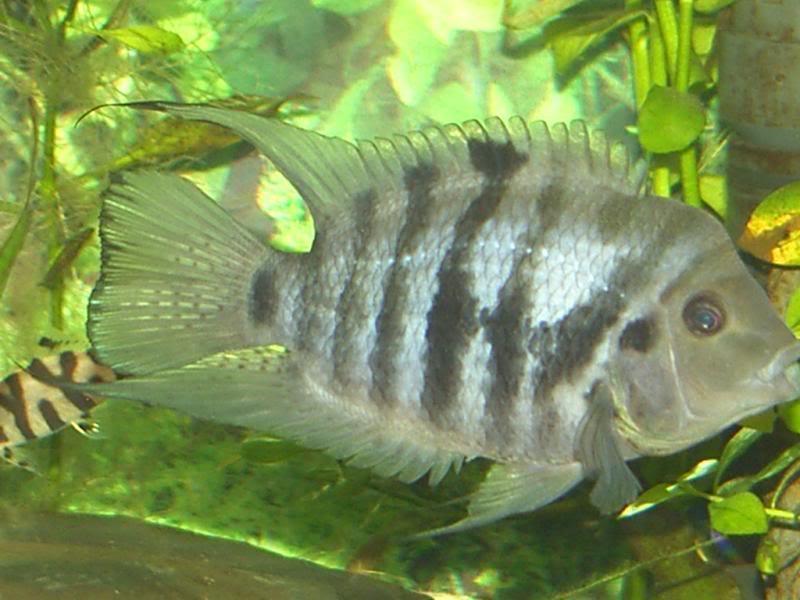 Fishy881.jpg