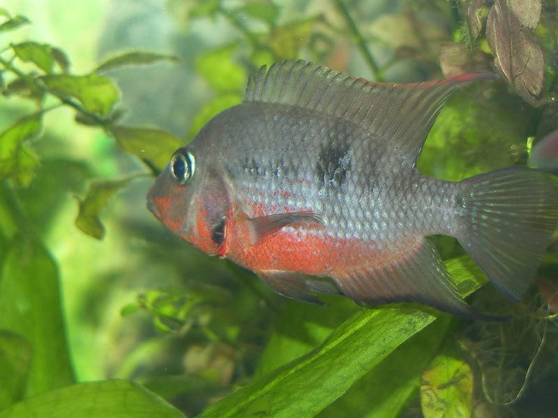 Fishy988.jpg