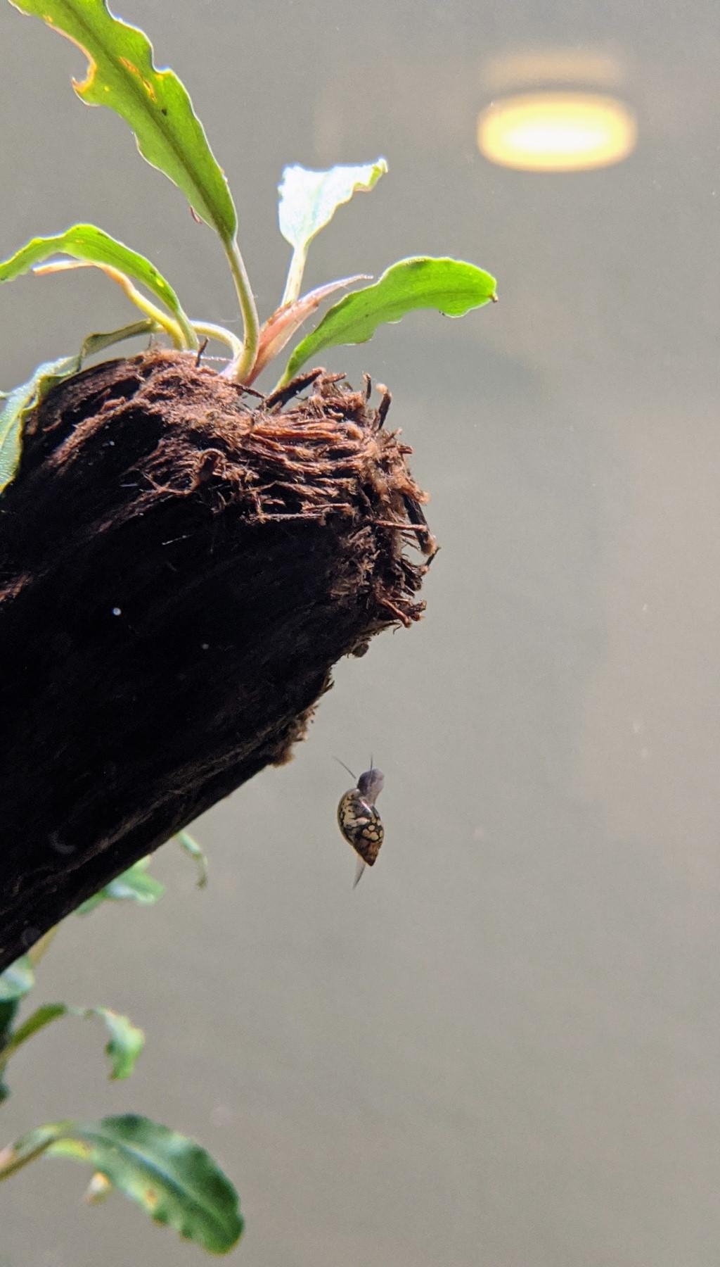 floating snail.jpg