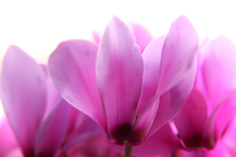 flower-crop.jpg