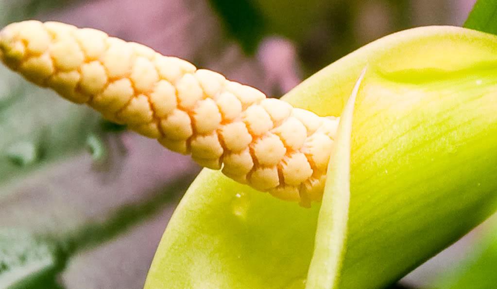 flowercloseapr12-1_zpsf4bbe63b.jpg