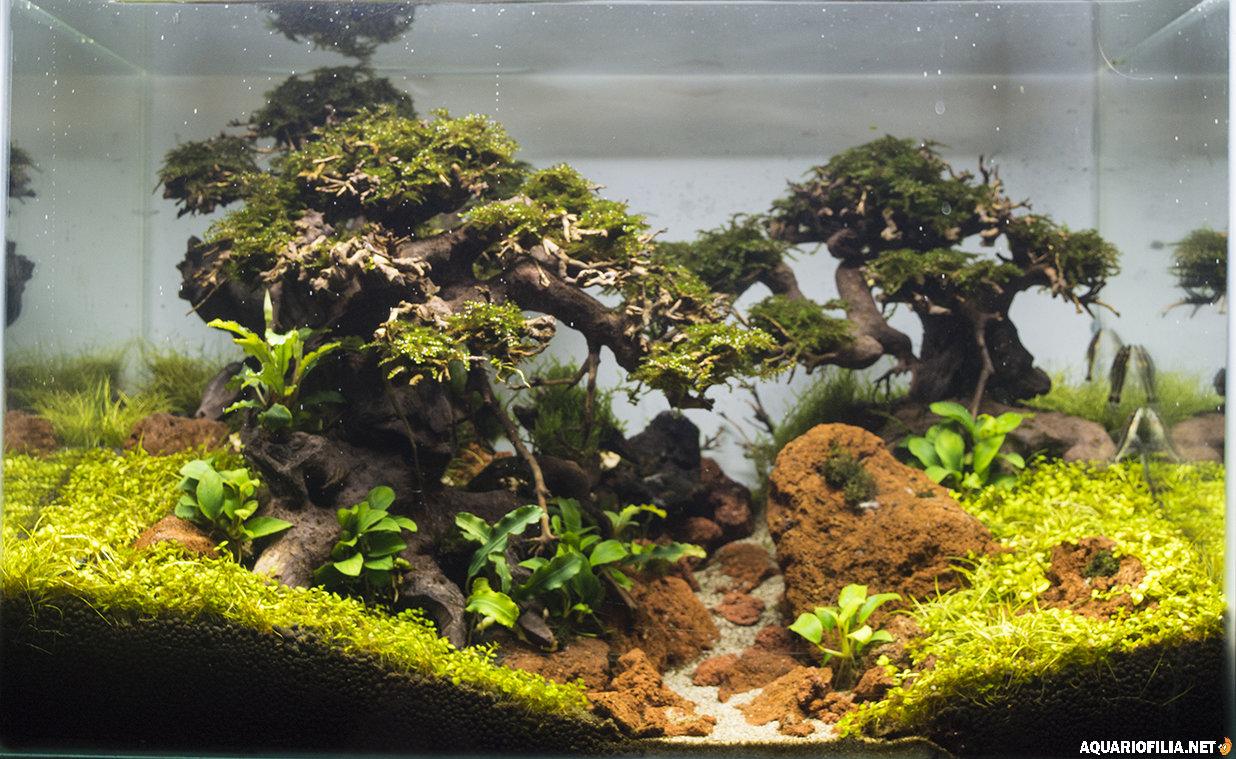 forestsmaller.jpg.06b8d52567a47498cfb3aedba4c7b185.jpg