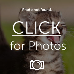 funny-pictures-kitten-is-amazing-1.jpg
