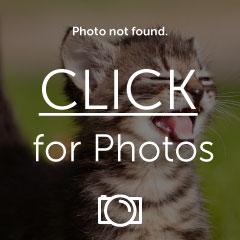 funny-pictures-polar-bear-is-snu-1.jpg