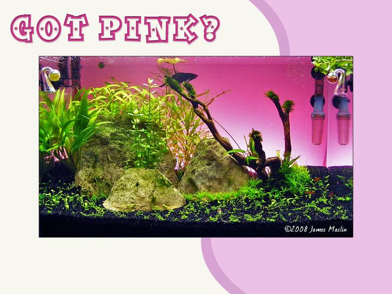 got_pink.jpg