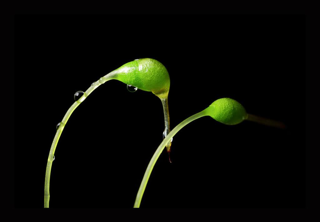 green-2.jpg