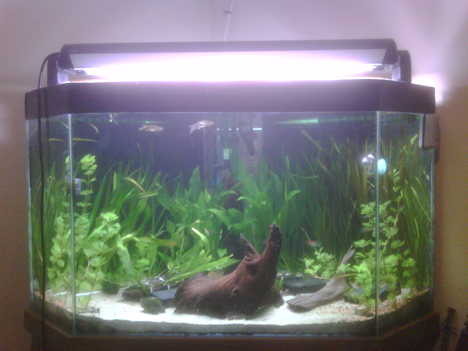img00232201003022030-jpg Frais De Aquarium Recifal Complet Concept
