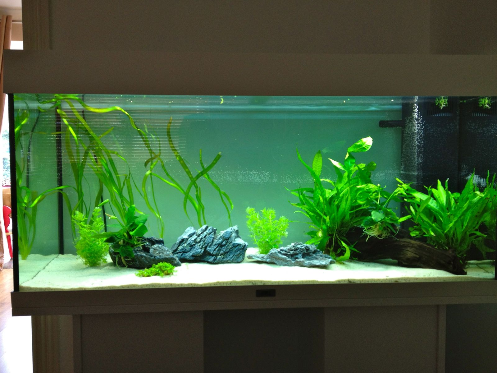 my first ever aquarium juwel rio 180l uk aquatic plant. Black Bedroom Furniture Sets. Home Design Ideas