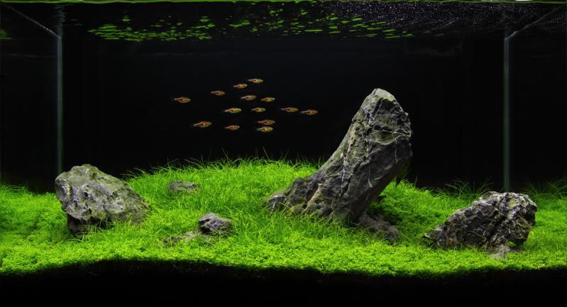 iwagumi-crop-1.jpg