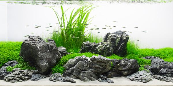 Iwagumi Style Aquascape