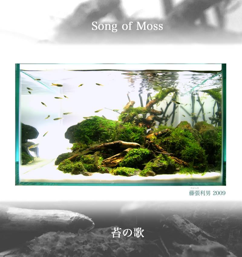 koke-no-uta2copy.jpg