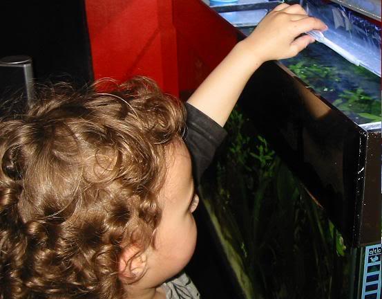 kookyfish2.jpg