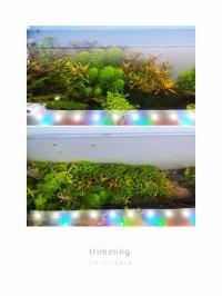 mini_191117051905826282.jpg