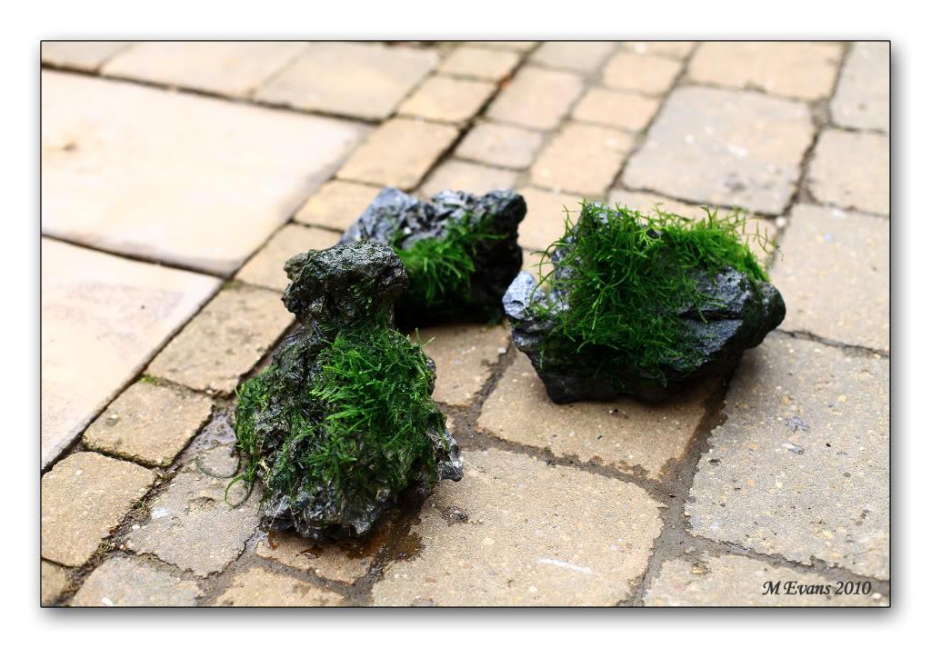 moss-on-stone.jpg