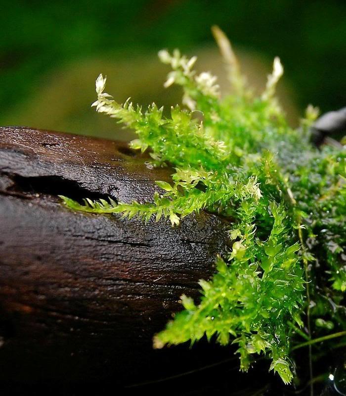Moss014ps.jpg