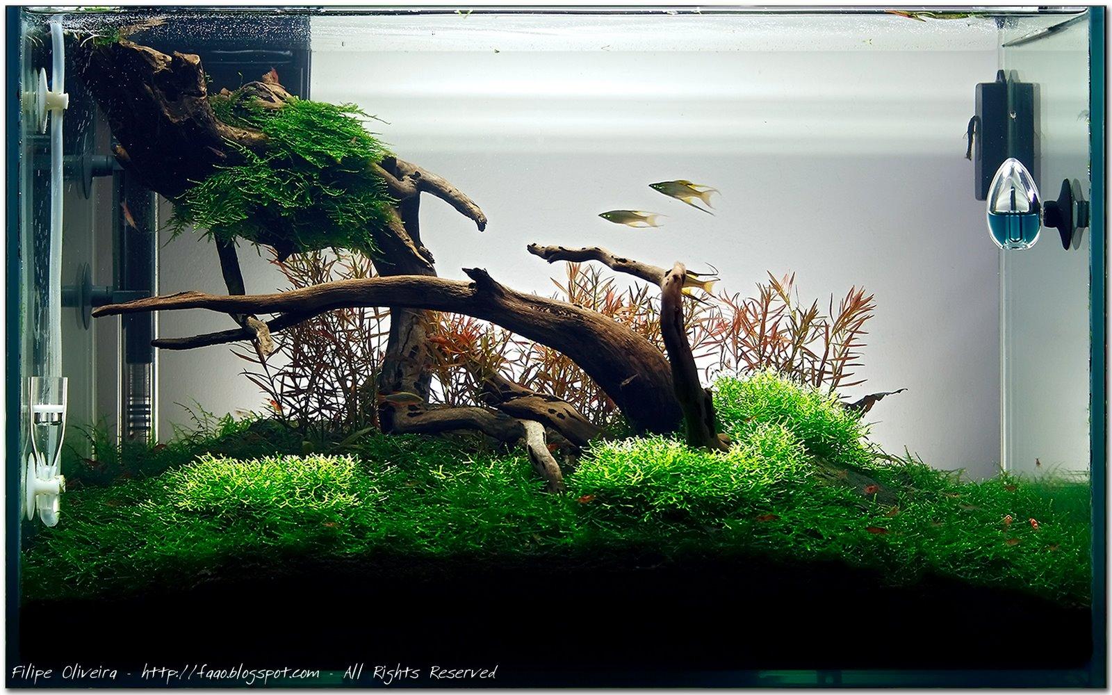 Moss20080813.jpg