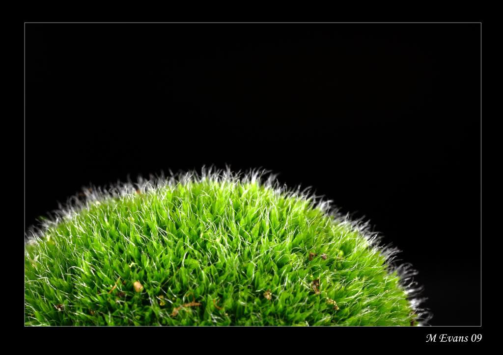 mossymound-1.jpg