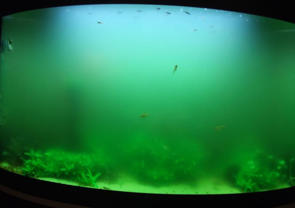 murky-fishtank.jpg