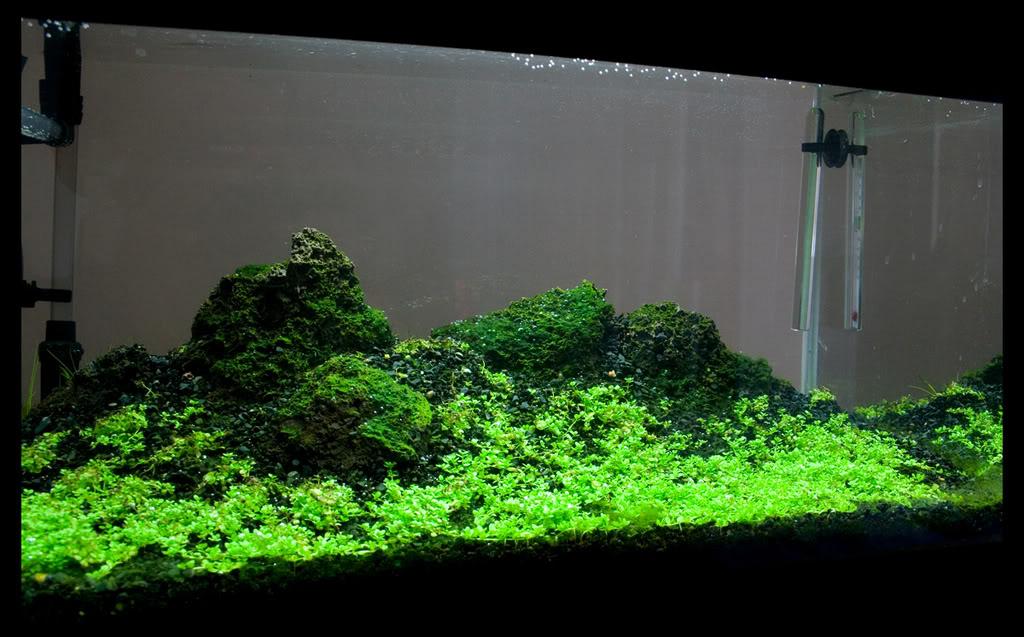 NasaasaaqUnderwater.jpg