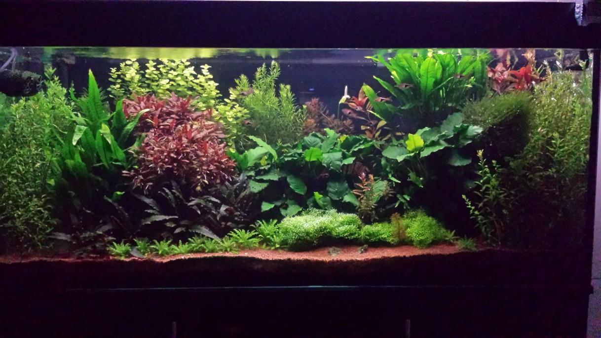 240l Dutch/Nature Aquarium UK Aquatic Plant Society