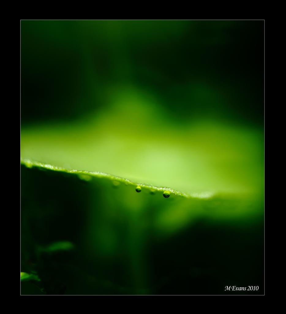 pearlinghydra.jpg