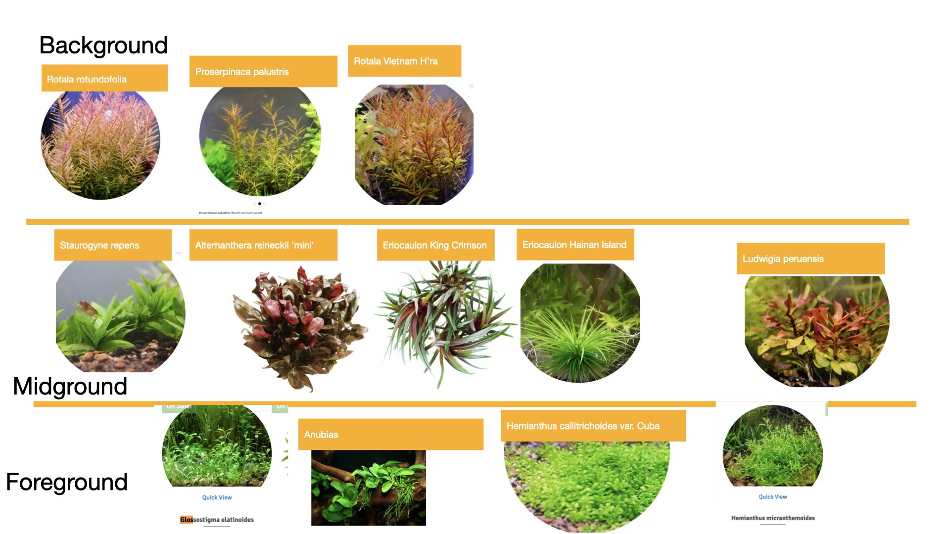 plant selection new .001.jpeg
