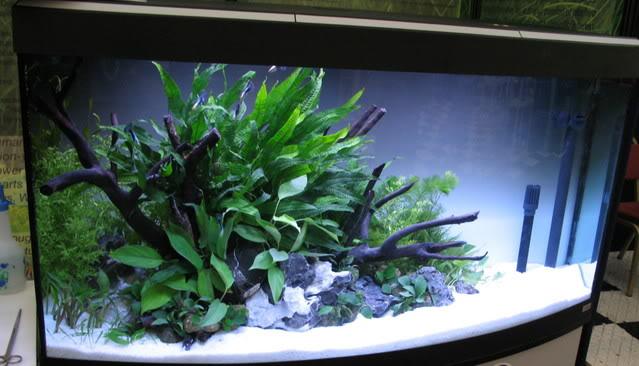 plantedtank.jpg